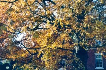 Bauerngarten Steenblock