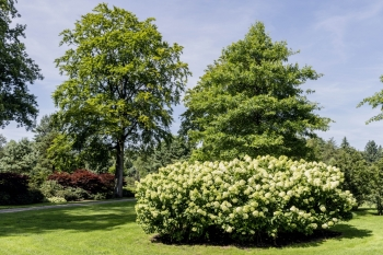 Rhododendronpark Wiefelstede